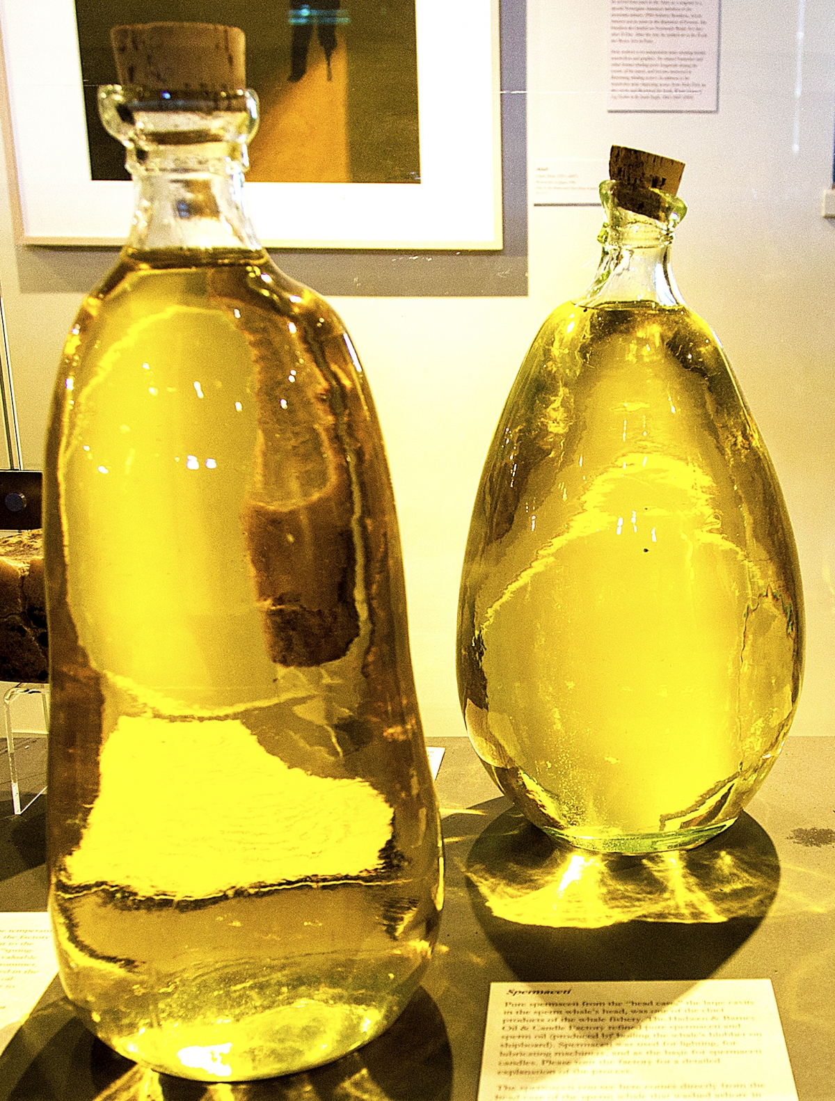 Sperm whale oil flasks from a beached sperm whale in 1998, Nantucket whaling museum