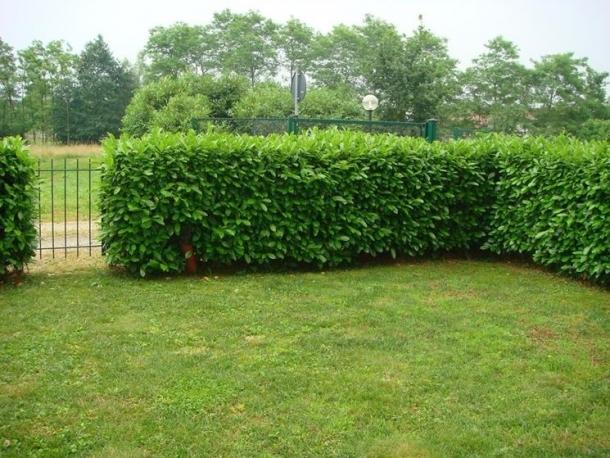aumentiamo la sicurezza tenendo il giardino sgombro da possibili nascondigli